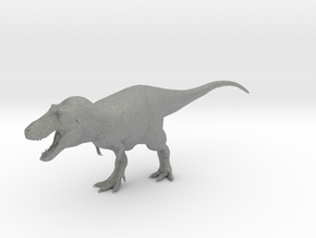 Tyrannosaurus rex Model 1/85 or 1/50 Scale V2 in Gray PA12: Small