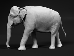 Indian Elephant 1:35 Walking Female in White Natural Versatile Plastic