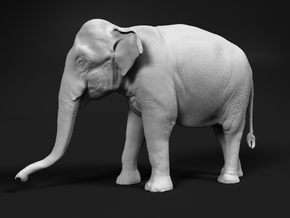 Indian Elephant 1:16 Standing Female 1 in White Natural Versatile Plastic