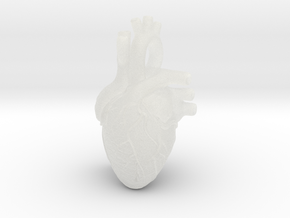 Anatomical Heart Pendant in Smooth Fine Detail Plastic