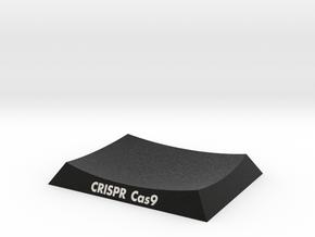 CRISPR Cas9 Base in Natural Full Color Sandstone: Extra Small