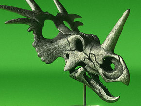 Styracosaurus skull - dinosaur model in White Natural Versatile Plastic: 1:16