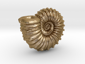 Ammonite in Polished Gold Steel