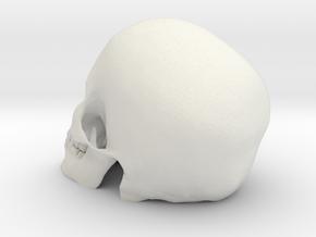 Detailed Skull in White Natural Versatile Plastic