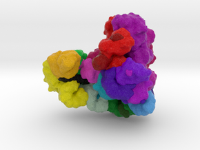Anaphase-Promoting Complex (Cyclosome) in Natural Full Color Sandstone