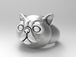 Exotic shorthair cat signet ring size 6.5 in Natural Silver