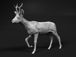 Roe Deer 1:45 Walking Male in Smooth Fine Detail Plastic
