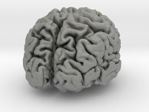 Brain replica half scale from MRI scan in Gray PA12