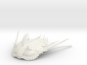 Trilobite - Kettneraspis prescheri (no stand) in White Natural Versatile Plastic