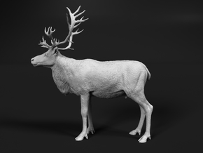 Reindeer 1:16 Standing Male 1 in White Natural Versatile Plastic