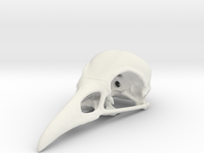 Bird Skull - Micro in White Natural Versatile Plastic
