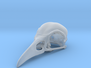Bird Skull - Micro in Smooth Fine Detail Plastic