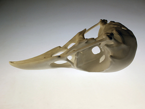 Bird Skull - Macro in White Natural Versatile Plastic
