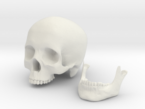 Human Skull scale 1/3 in White Natural Versatile Plastic