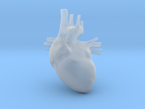 Anatomical Heart Hanger Pendant in Smooth Fine Detail Plastic