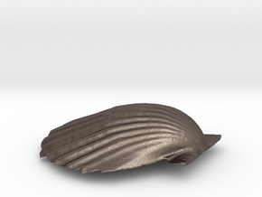 Scallop Shell in Polished Bronzed Silver Steel