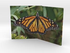 Butterfly Fold 3in in Full Color Sandstone