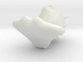 BW tüskefej in White Strong & Flexible