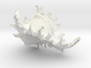 SeaShell in White Natural Versatile Plastic