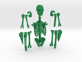 Articulated Skeleton  in Green Strong & Flexible Polished