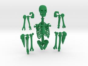 Articulated Skeleton  in Green Processed Versatile Plastic