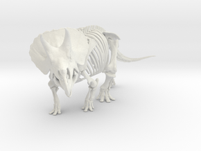 Triceratops horridus skeleton 1:20 scale in White Strong & Flexible