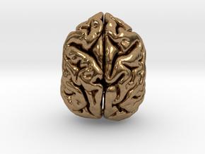 Sloth Bear Brain in Natural Brass