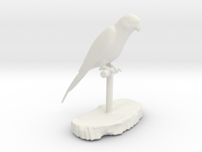 Bird Beauty Lorikeet Full Color by Space 3D  in White Natural Versatile Plastic