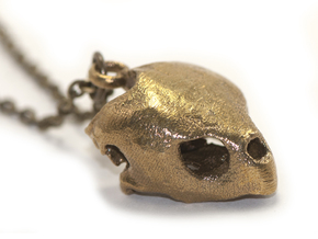 Loggerhead Sea Turtle Skull in Natural Brass