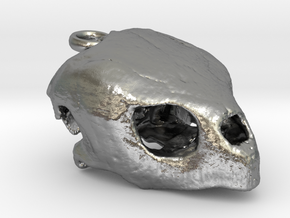 Loggerhead Sea Turtle Skull in Natural Silver