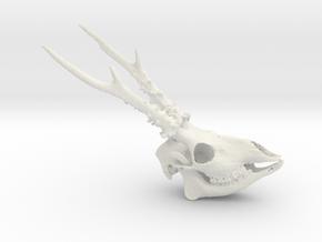 Roe Deer Skull - 110mm in White Natural Versatile Plastic