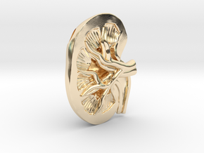 Anatomical Kidney Pendant in 14K Yellow Gold