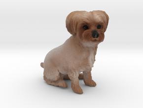 Custom Dog Figurine - Angel in Full Color Sandstone