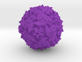 Polio Virus - 1 Million X in Purple Processed Versatile Plastic