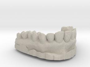 Anatomical Lower Teeth in Natural Sandstone