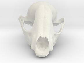 Bobcat Skull in White Strong & Flexible