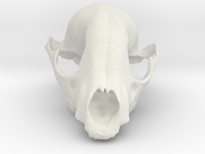Bobcat Skull in White Natural Versatile Plastic