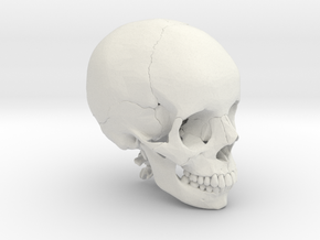 Human skull with colored bone - 1/2 life size in White Natural Versatile Plastic