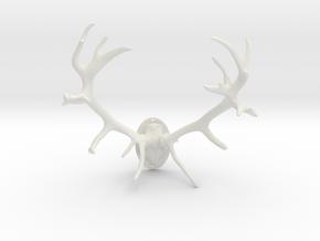 Red Deer Antler Mount 40mm in White Natural Versatile Plastic