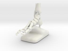 Large Scale Podiatry/Orthopedic Bones of Foot Mode in White Natural Versatile Plastic