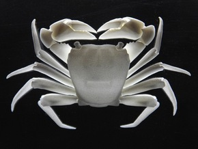Articulated Crab (Pachygrapsus crassipes) in White Natural Versatile Plastic