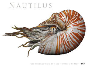 Nautilus 5.5cm in Smooth Fine Detail Plastic