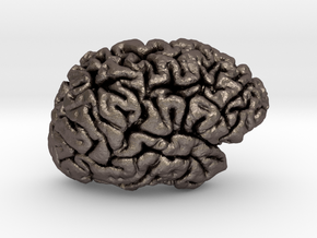 The right hemisphere of the brain - half scale in Polished Bronzed Silver Steel