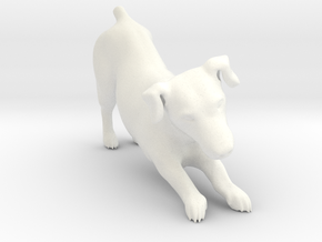 Stretching Jack Russell Terrier in White Processed Versatile Plastic