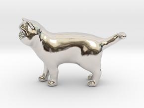 Standing Exotic Shorthair Cat in Platinum