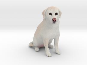 Custom Dog Figurine - Cocoa in Full Color Sandstone