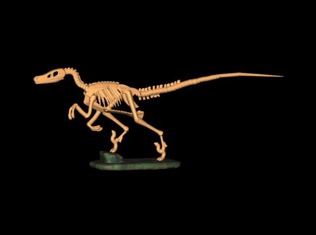 Dinosaurs Story Velociraptor Skeleton Full Color  in Frosted Ultra Detail