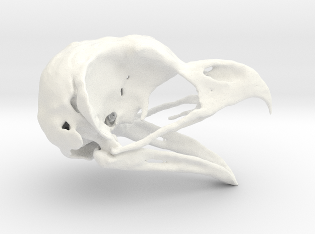 Great Horned Owl Skull - Life sized in White Strong & Flexible Polished