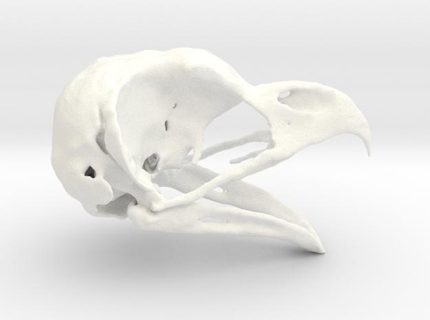 Great Horned Owl Skull - Life sized