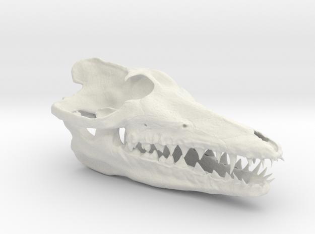 Pakicetus skull in White Natural Versatile Plastic